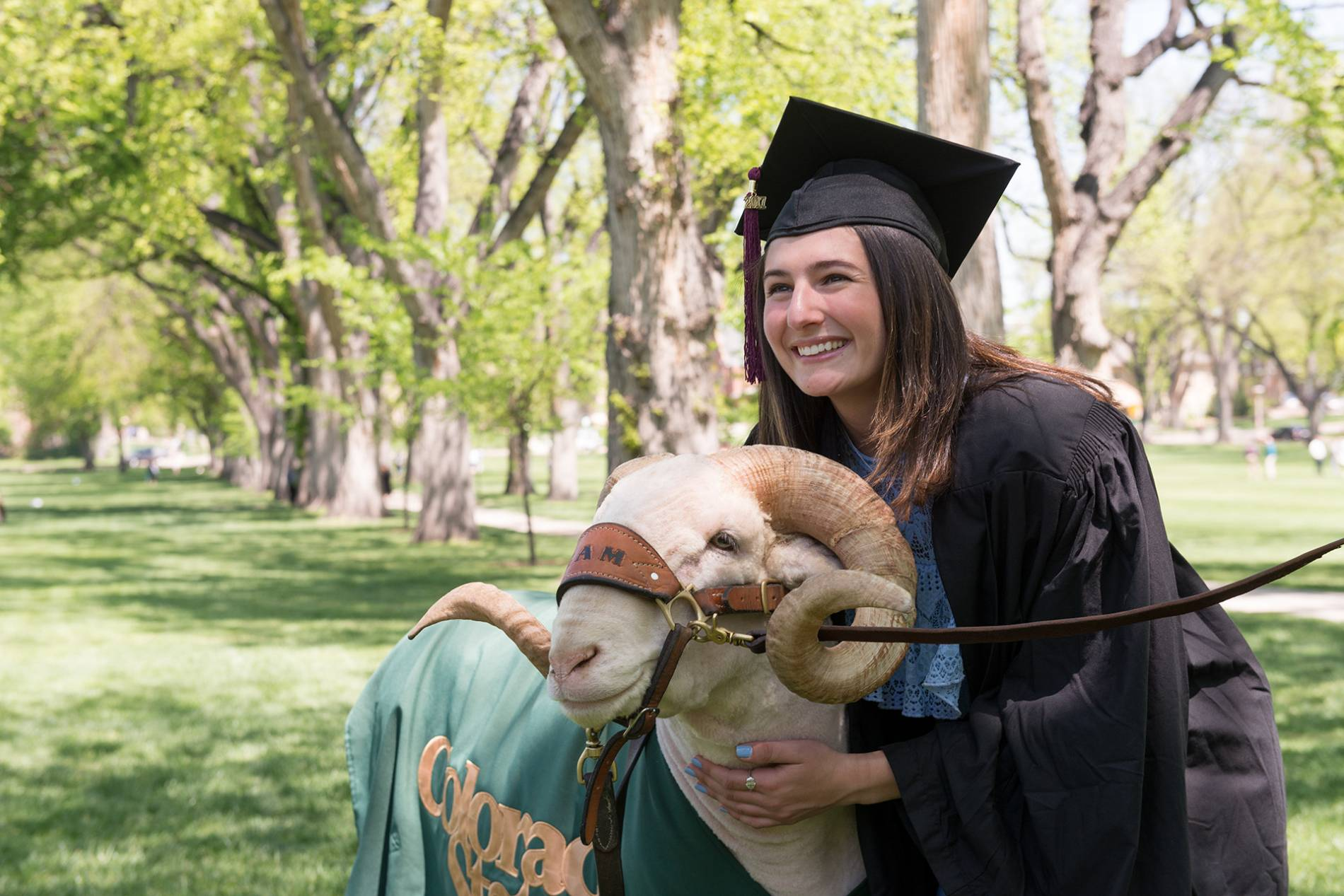 A Colorado State graduate poses with Cam the Ram on the Oval during Commencement weekend, May 2017